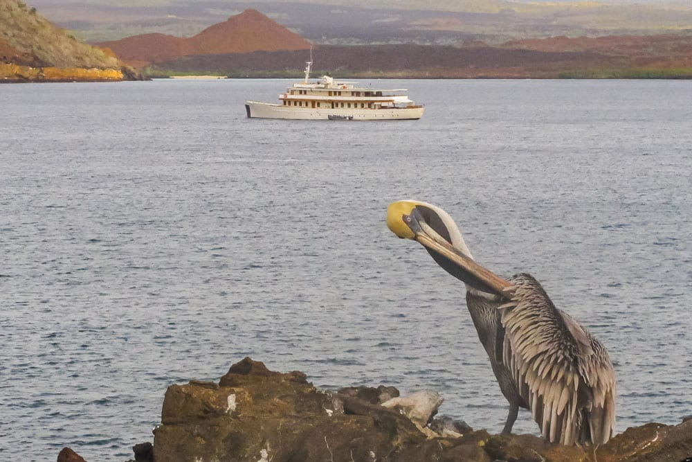 Galapagos in South Africa 2