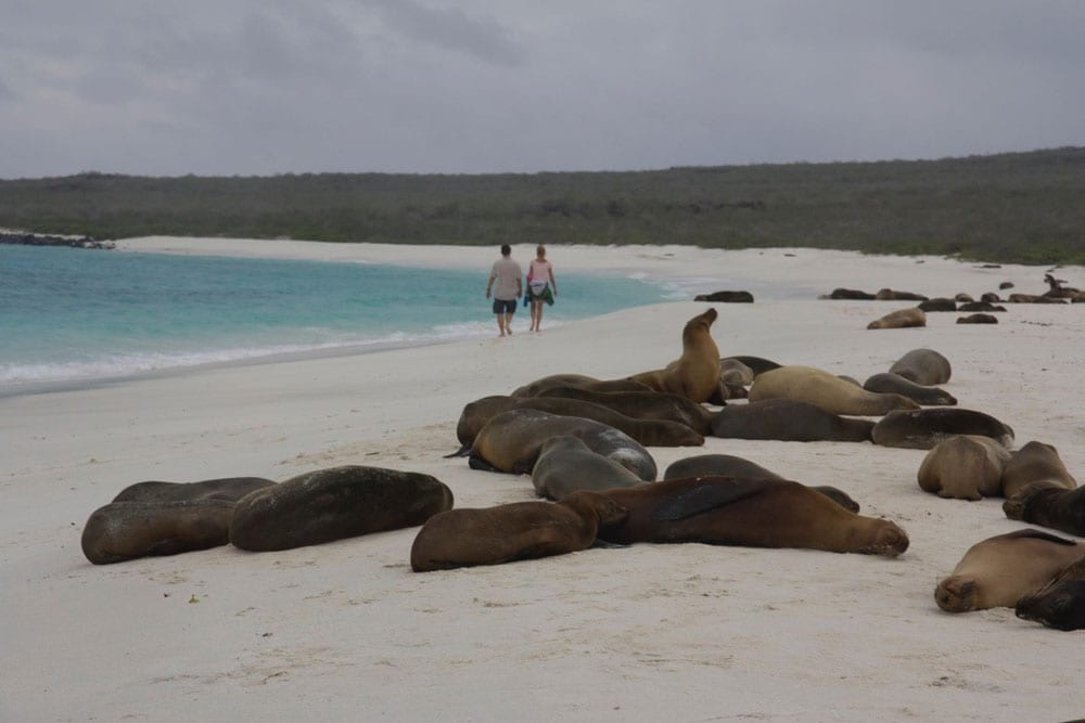 Seals on beach of Galapagos