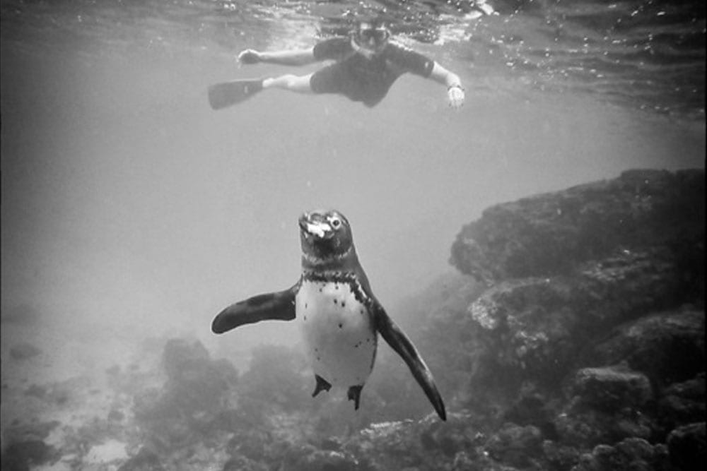diver discovering penguins